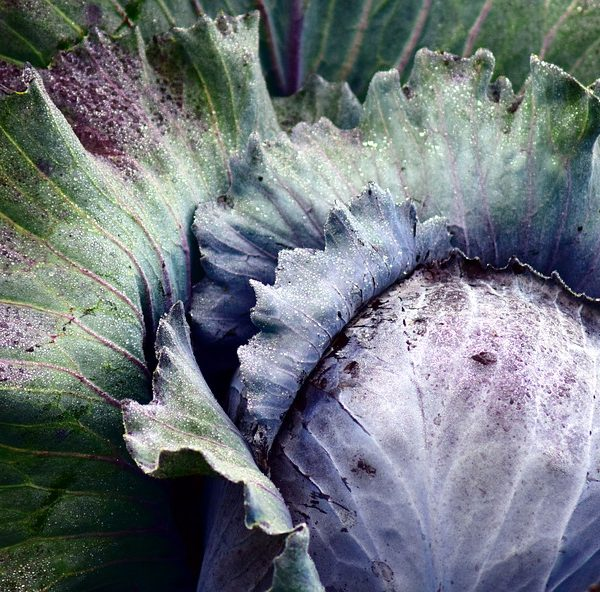 Winter Garden Vegetables: What to Grow and How to Prepare Them