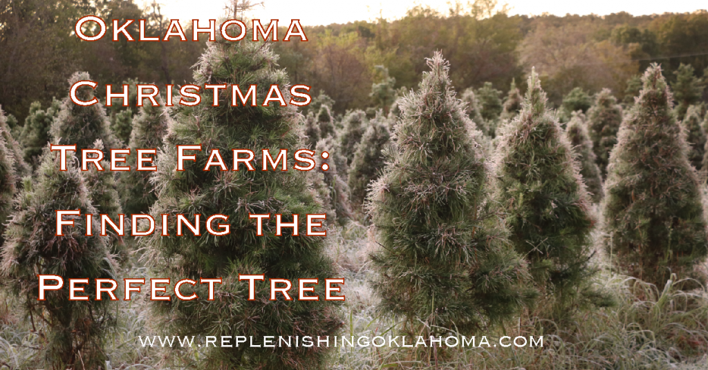 Everything you need to know for starting a festive and fun tradition for finding a real or live Christmas tree from an Oklahoma Christmas tree farm!