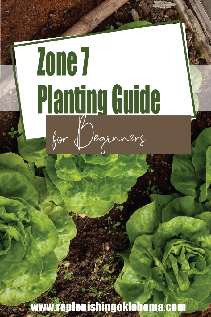 Feature picture with cabbage that says zone 7 planting guide for beginners