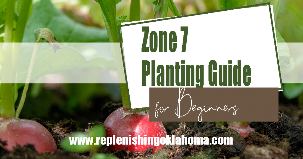 Feature picture with radish that says zone 7 planting guide for beginners