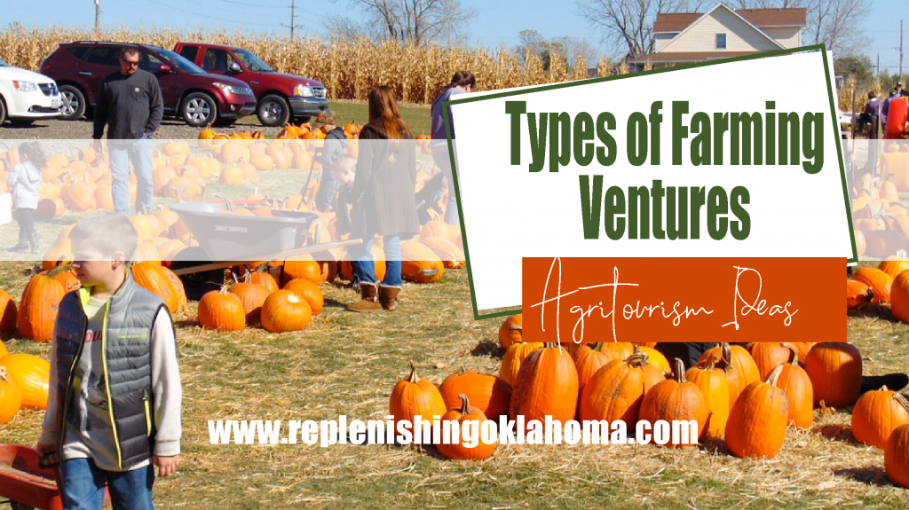 Agritourism ideas feature picture with a pumpkin patch and corn maze