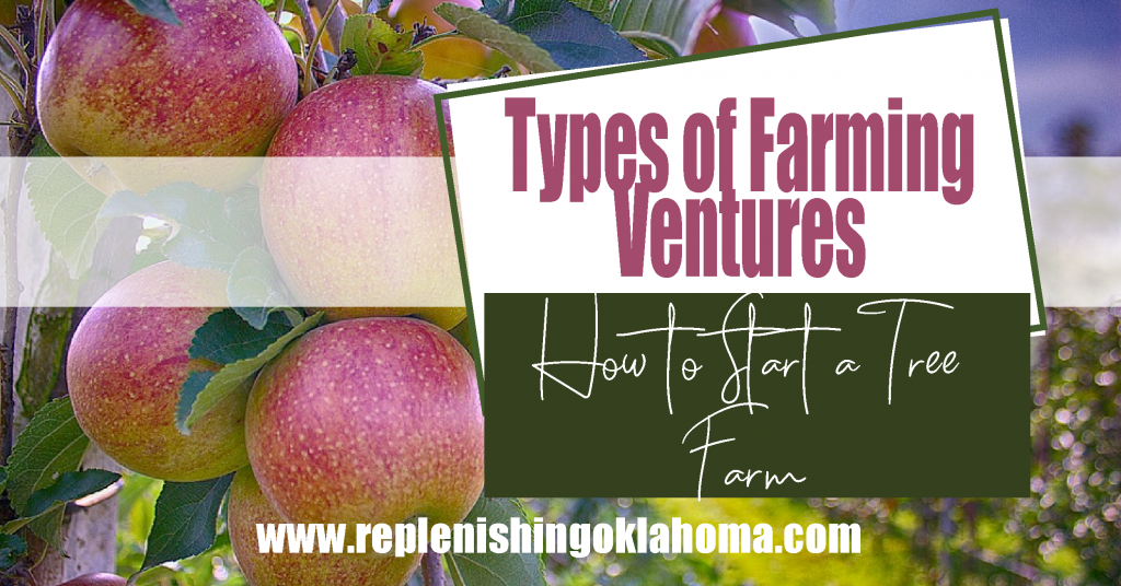 Feature image types of farming ventures: How to Start a Tree Farm. Orchard in the background