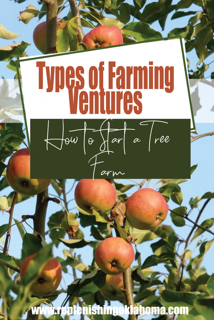 Feature image for Pinteresttypes of farming ventures: How to Start a Tree Farm. Orchard in the background