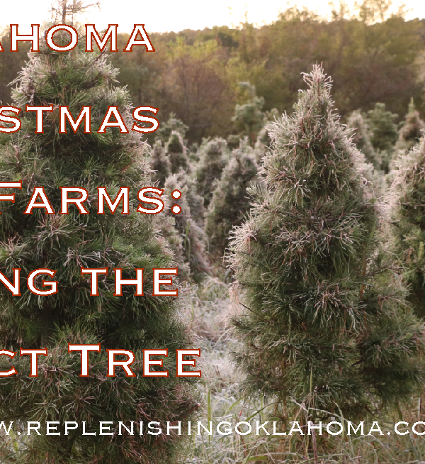 Oklahoma Christmas Tree Farm: Finding the Perfect Tree